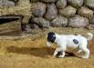 doggy_08
