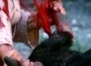 karatebullfighter_02