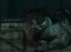 the-cat-04