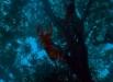 tigressofkingriver_05