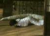 snakegirl_09