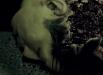 ZombieFightClub_03